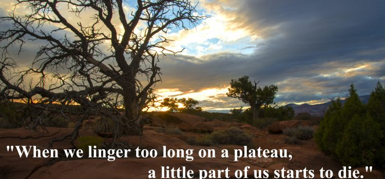 Rookie tip: when we linger too long on a plateau, a little part of us starts to die, Liz Wiseman