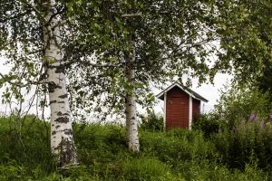 Outhouse in an aspen forest