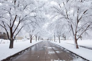 The long wooded lane leading into the Ogden-Weber Technical College, with trees hanging in snow. The founder, Brent Wallis, showed by example how to be a business storyteller.