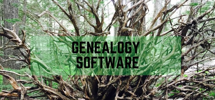 Genealogy software review: RootsMagic vs. Legacy - image of a fallen old growth tree with massive root system above ground